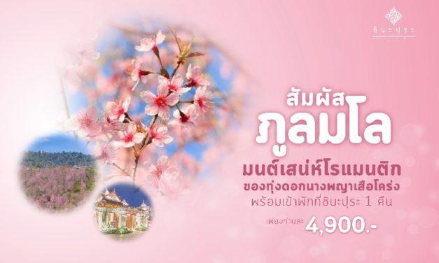"""""""โรงแรมชินะปุระ"""" ชวนนักเดินทาง ชมซากุระเมืองไทยที่ """"ภูลมโล"""" กับแพ็คเกจสุดคุ้มรับลมหนาว"""