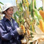 ซินเจนทา ประกาศแผนความยั่งยืนธุรกิจปี 62 สอดรับองค์การสหประชาชาติ มุ่งสร้างอาหารปลอดภัย