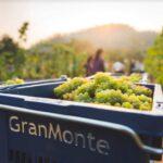 """""""ไร่องุ่นไวน์กราน-มอนเต้"""" มอบประสบการณ์สุดพิเศษ กับ """"GranMonte Sparkling Harvest Festival 2020"""""""
